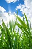 Bastón verde imagen de archivo libre de regalías