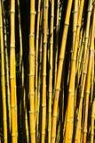 Bastões de bambu Imagens de Stock