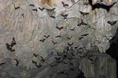 Bastões que voam na caverna de Lanquin, Guatemala fotografia de stock royalty free