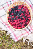 Bast basket with fresh raspberries and blueberries on a tablecloth on the grass. Harvest of raspberries and blueberries in a wicker basket in the village Royalty Free Stock Photo