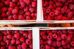 Bast baskets of red raspberries. (rubus idaeus) on display for sale Royalty Free Stock Image