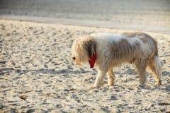 Bastaarde hond die en op strand spelen lopen Royalty-vrije Stock Foto's