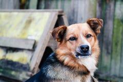 Bastaarde hond met bruine en zwarte wol op de achtergrond van een oude houten omheining stock foto's