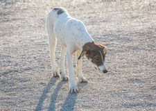 bastaarde hond met een droevige blik Royalty-vrije Stock Afbeelding