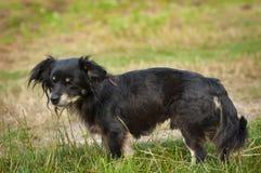 Bastaarde hond op gezichts dichte omhooggaand Royalty-vrije Stock Foto's