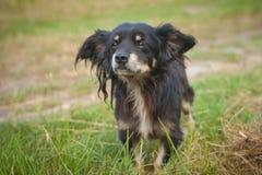 Bastaarde hond op gezichts dichte omhooggaand Royalty-vrije Stock Afbeeldingen