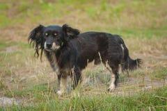 Bastaarde hond op gezichts dichte omhooggaand Stock Foto