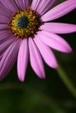 Bastante en color de rosa Imagen de archivo libre de regalías