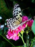 Bastante en color de rosa Imagenes de archivo