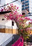 Bastante en color de rosa Fotografía de archivo