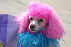 Bastante en color de rosa Foto de archivo