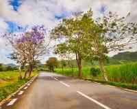 Bastante a estrada entre montes verdes ajardina, Maurícias Fotografia de Stock Royalty Free