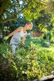 Bastante, mujer joven que cultiva un huerto en su jardín, cortando ramas fotos de archivo