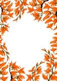 Bastard Teak flowers pattern Stock Image