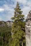 Bastei山储备 撒克逊人的瑞士 免版税库存图片