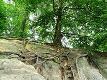 Bastei royalty free stock photos