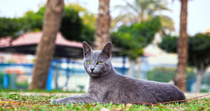 Bastet. A homeless cat in Cairo with royal looks Stock Images