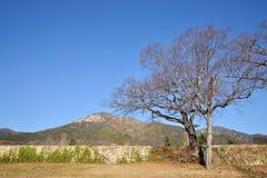 Bastione tradizionale coreano della muratura Immagine Stock Libera da Diritti