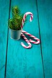 Bastoncini di zucchero di Natale e rami dell'abete rosso Fotografia Stock Libera da Diritti