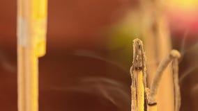bastoncino d'incenso video d archivio