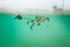 Bastone del calamaro il gancio dei pescatori Immagine Stock Libera da Diritti