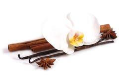 Bastone della vaniglia con il fiore dell'orchidea. Fotografia Stock