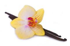 Bastone della vaniglia con il fiore dell'orchidea. Fotografia Stock Libera da Diritti