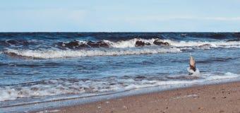 Bastone di legno che sta contro la spiaggia del mare del wavesnorth Fotografie Stock Libere da Diritti