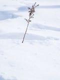 Bastone sfrondato del ramo su neve - con spazio per testo, area di parola Immagini Stock Libere da Diritti