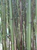 Bastones de bambú Fotos de archivo