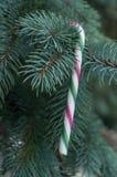 Bastones de caramelo en el árbol de navidad Foto de archivo libre de regalías