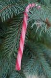 Bastones de caramelo en el árbol de navidad Fotos de archivo