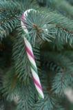 Bastones de caramelo en el árbol de navidad Imágenes de archivo libres de regalías