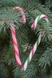 Bastones de caramelo en el árbol de navidad Foto de archivo