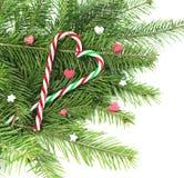 Bastones de la Navidad en conífera con los corazones Fotografía de archivo