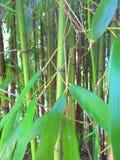 Bastones y hojas de bambú Fotografía de archivo