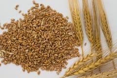 Bastoni del grano, dell'orzo e del grano su fondo bianco Vista superiore Immagine Stock Libera da Diritti