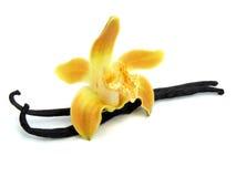 Bastoni della vaniglia e dell'orchidea isolati su bianco Fotografia Stock