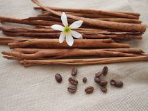 Bastoni di cannella e del fiore bianco e del chicco di caffè su tela Fotografie Stock