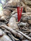 Bastoni di incenso sotto l'albero Fotografia Stock