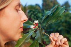 Bastoni e fiori crudi dei chiodi di garofano di fiuto della donna Fotografia Stock