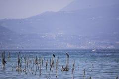 Bastoni nel lago Immagine Stock Libera da Diritti