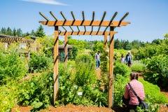 Bastyr universitetbotanisk trädgård Arkivbild