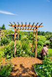 Bastyr University garden. Bastyr University botanical garden featuring medicinal plants Royalty Free Stock Photo
