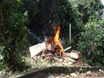 basura ardiente en las zonas tropicales metrajes
