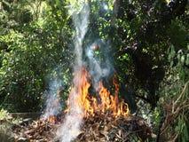 basura ardiente en las zonas tropicales almacen de video