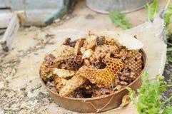 basura de la apicultura del panal Fotografía de archivo