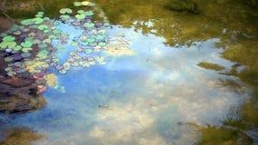 Basura de la contaminación de la basura en el agua sucia del lago metrajes