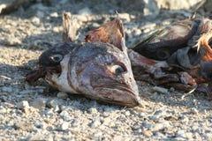 Basura de los pescados Foto de archivo