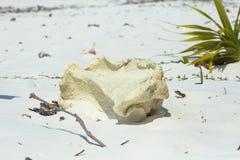 Basura en la arena blanca Fotografía de archivo libre de regalías